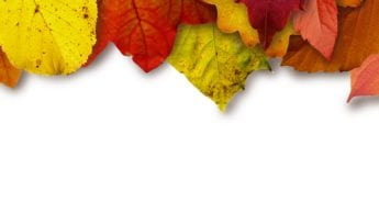 leaves-colorful-color-yellow-64732